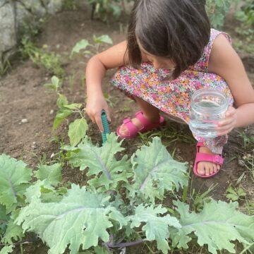ბავშვი, რომელიც ქეილს ზრდის, ჭამს ქეილს…